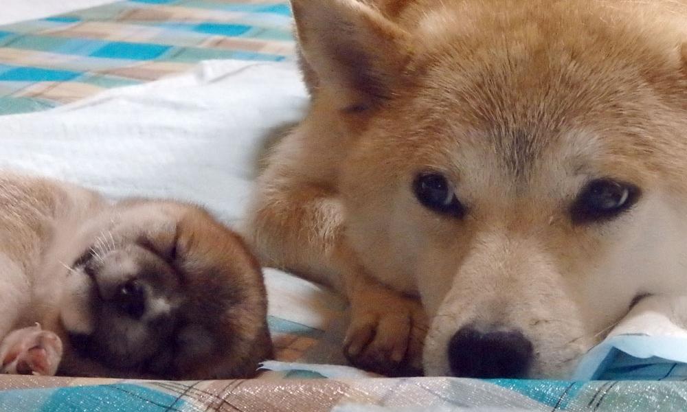 ハナと子犬。