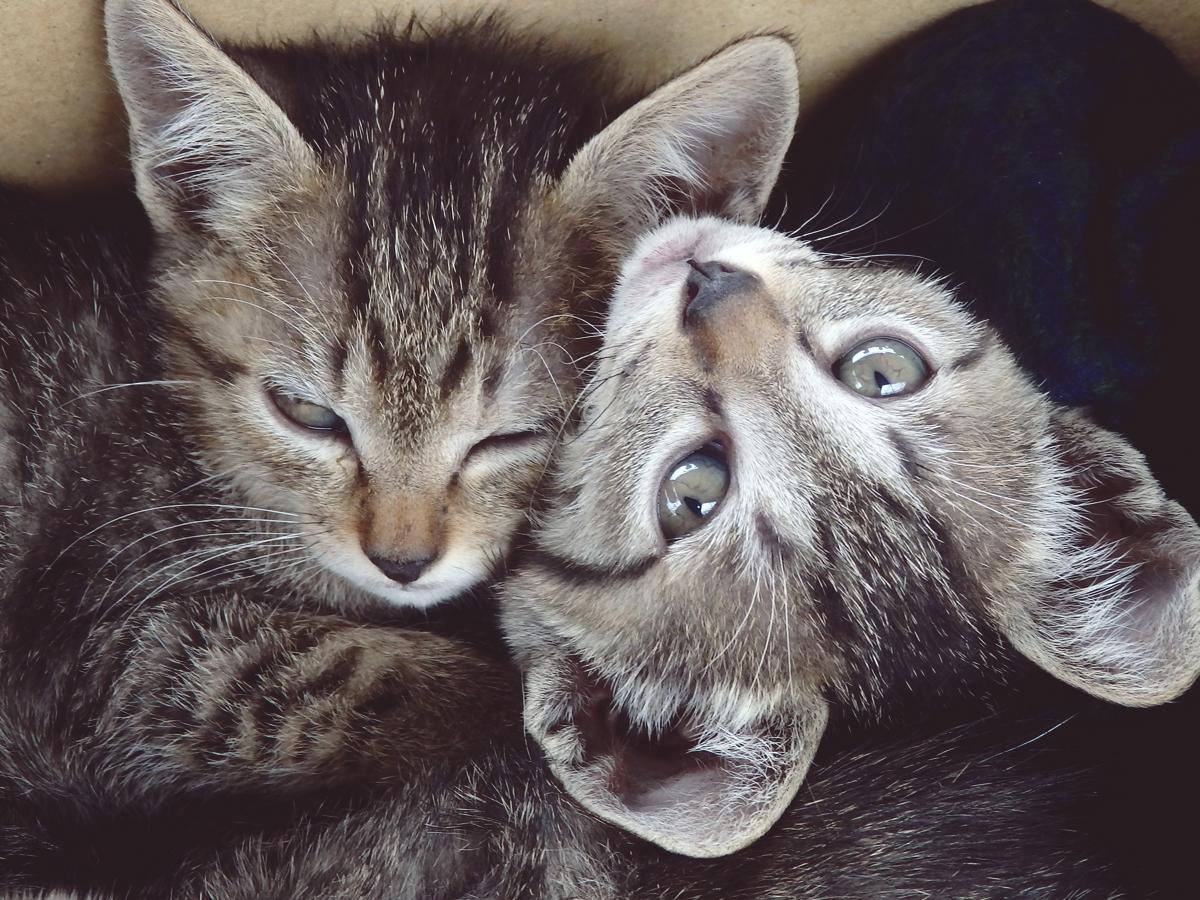 一般参加の子猫たち。