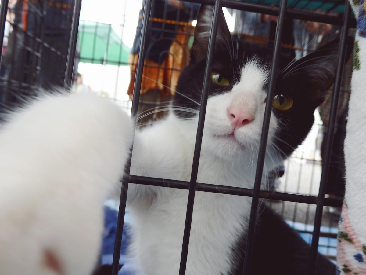 カメラにパンチする猫①(一般参加の猫さんです)
