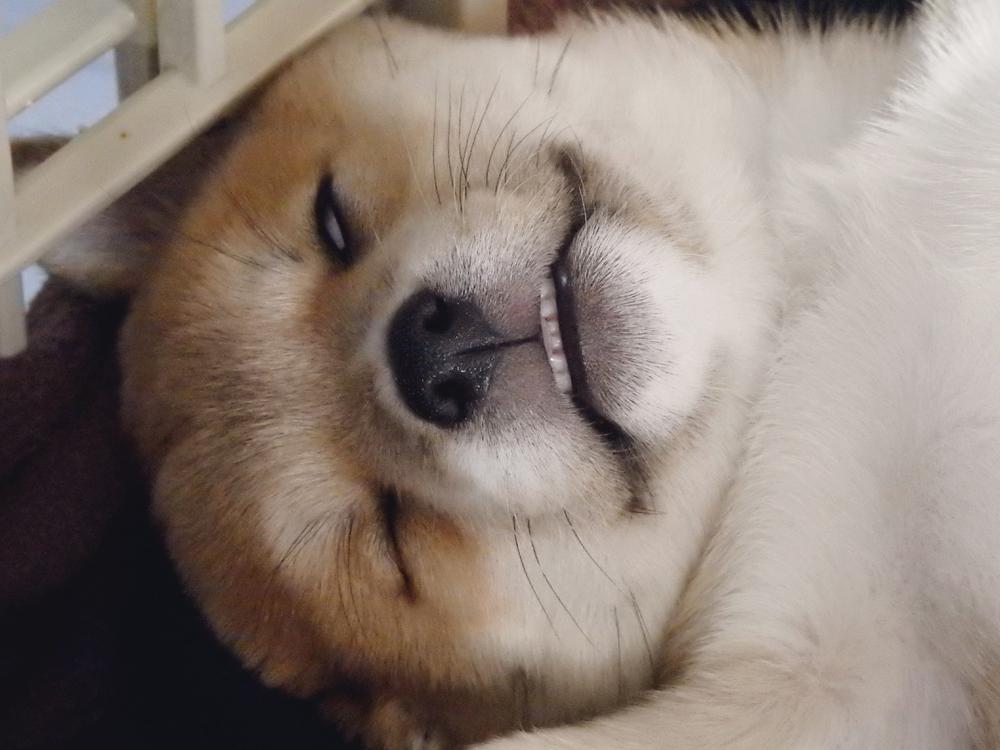 ブラウンの寝顔