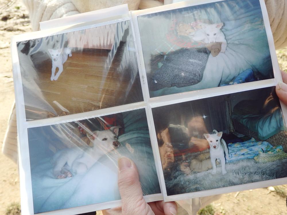 里親さんと暮らしていたわんちゃんのお写真