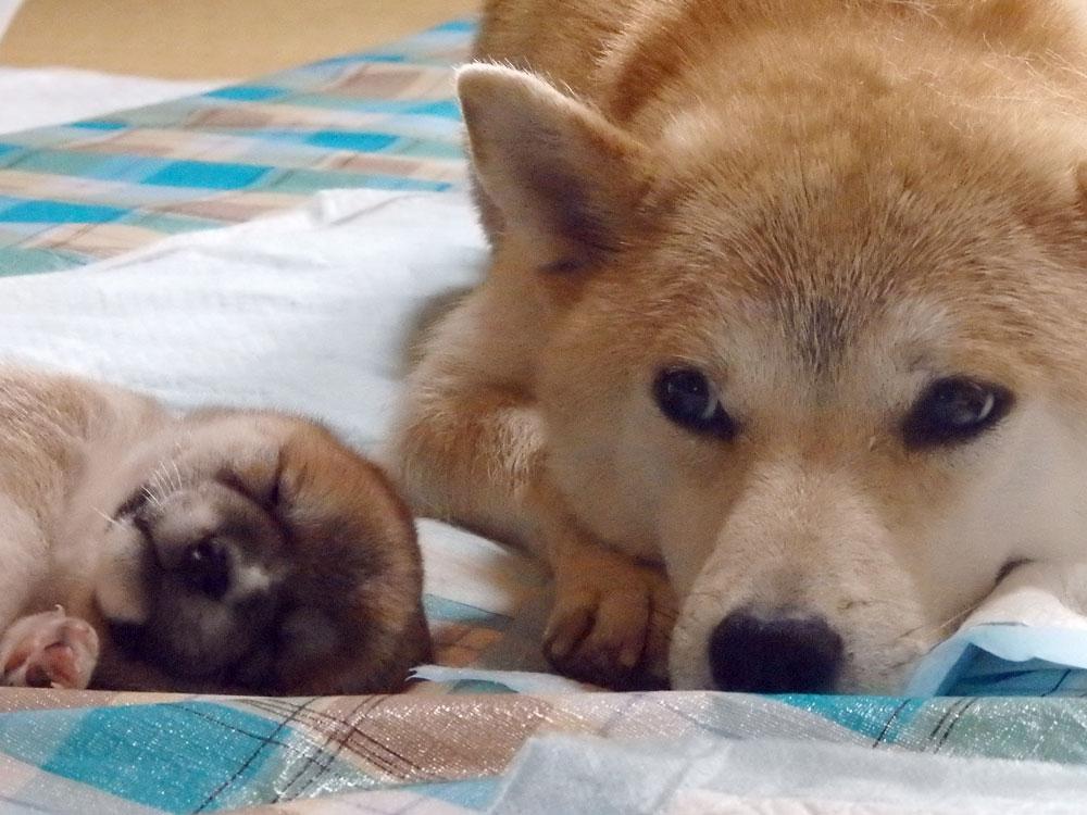 ハナと子犬の成長キロク