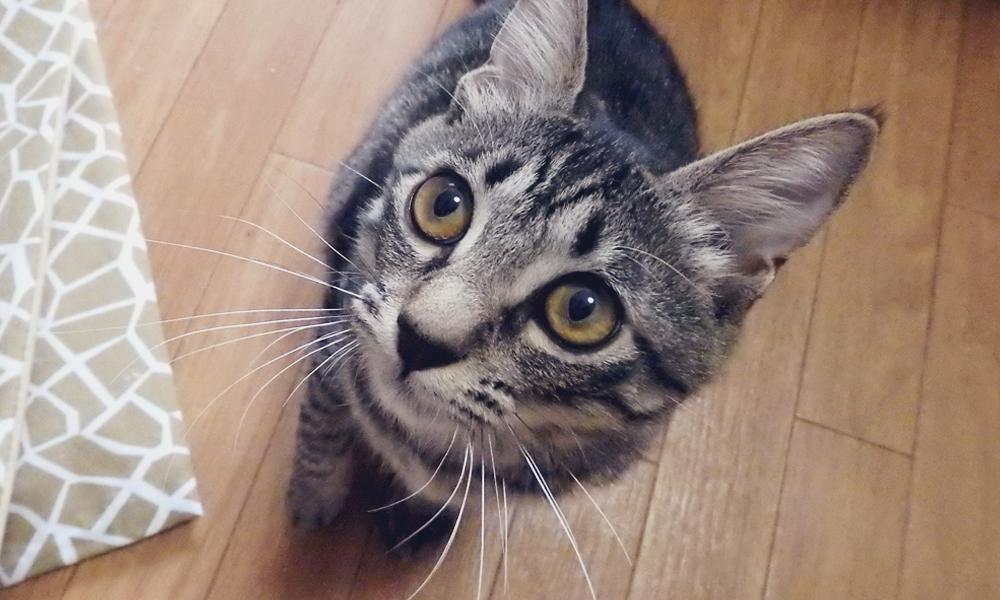 猫のふう(生後6ヶ月頃)