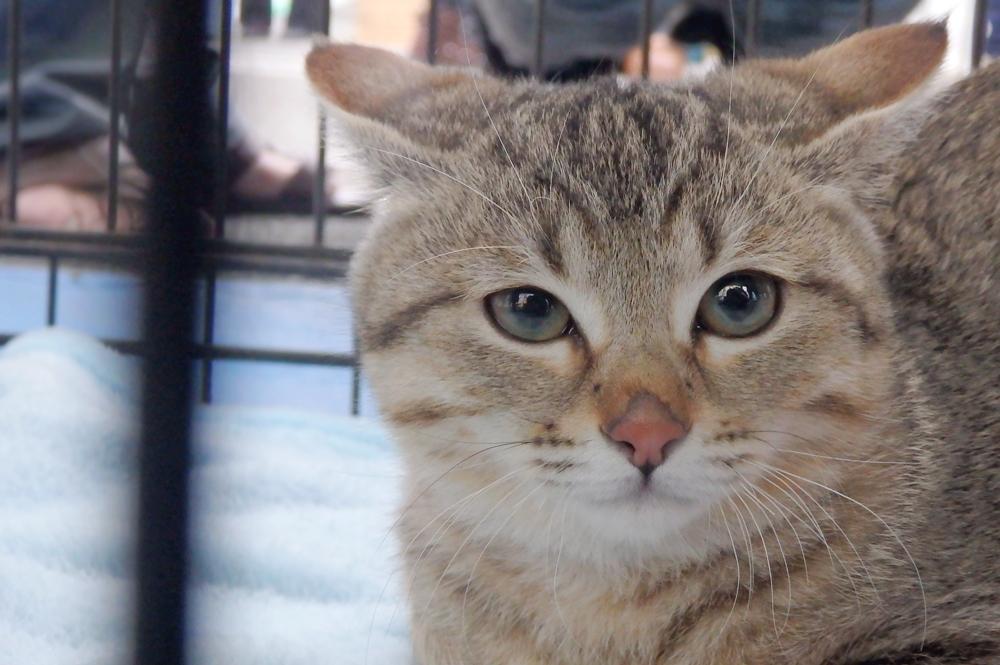 一般参加の猫ちゃん/わんにゃん譲渡会にて(2016年1月17日)
