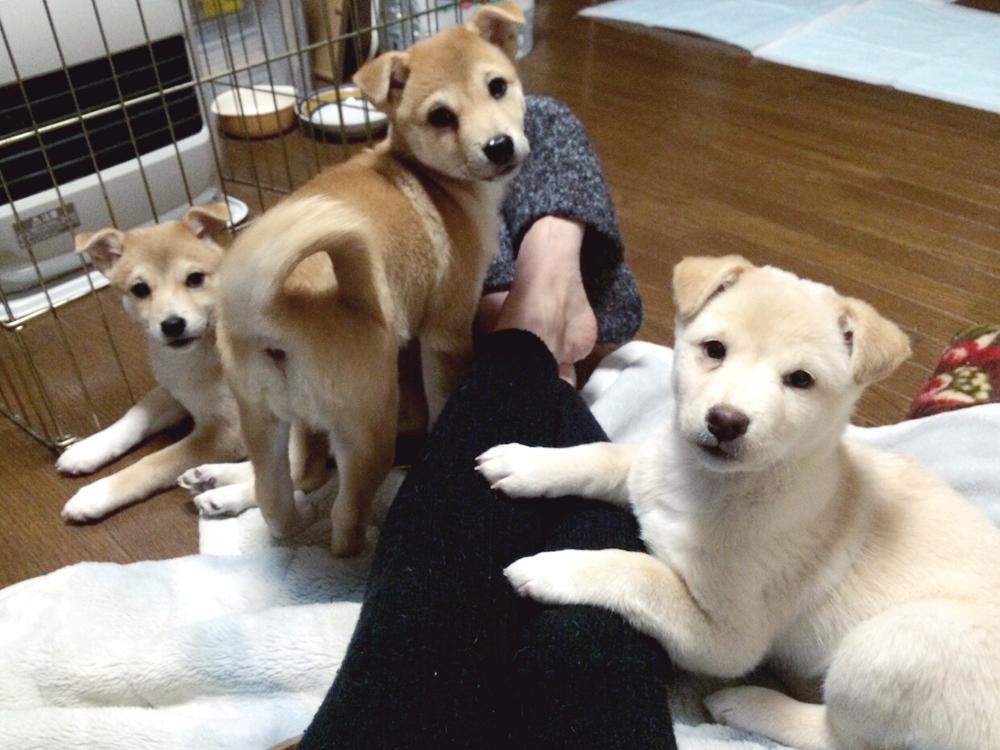 3-pupies-on-knees