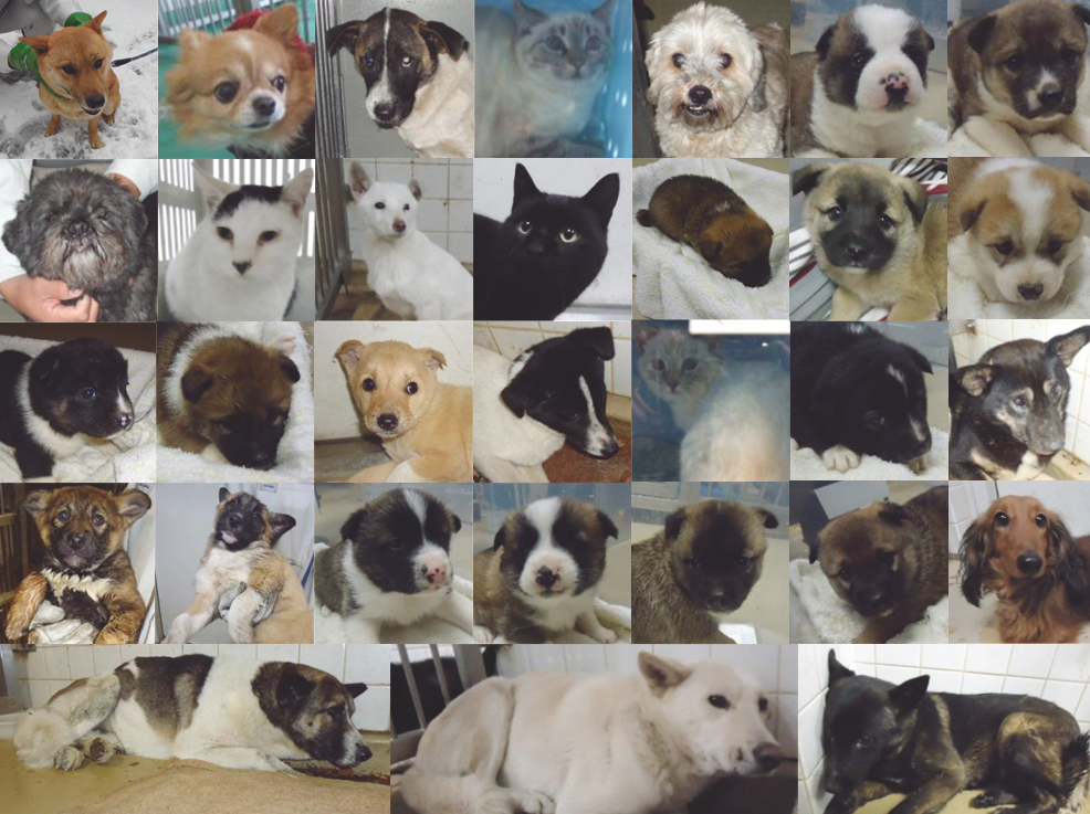保険所に腫瘍されている犬猫情報(山口県)