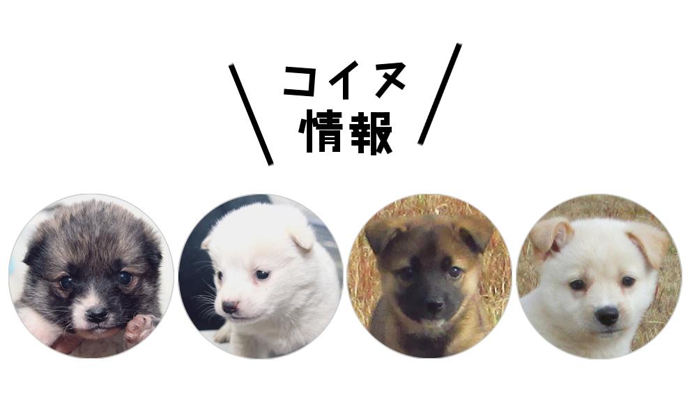 子犬情報(ボイスオブアニマルズ)