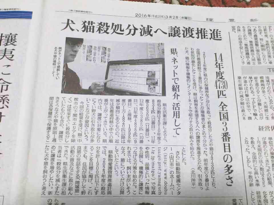 犬猫殺処分数ワースト3/山口県