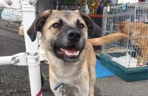 保護犬 ポヨン - ボイスオブアニマルズ
