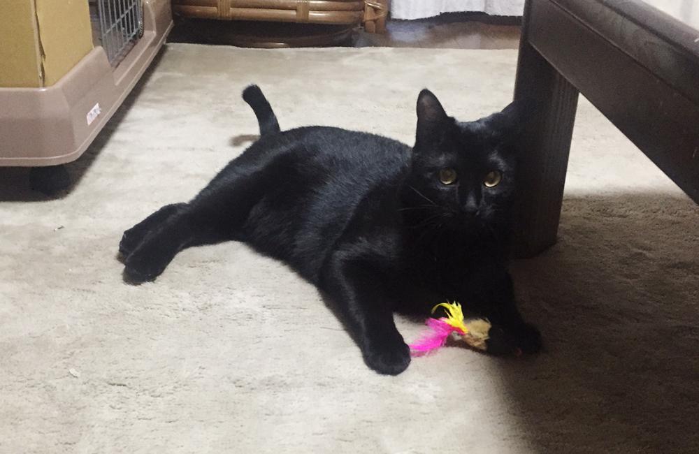 保護猫 てつ - ボイスオブアニマルズ