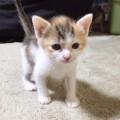 三毛猫のアン
