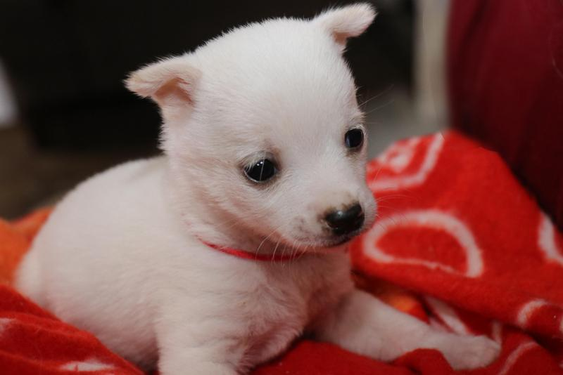 白い子犬の「ああ」