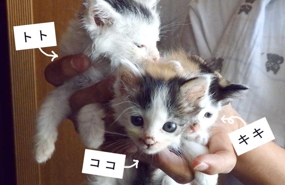 キキ、ココ、トトの名前がつきましたよ♫