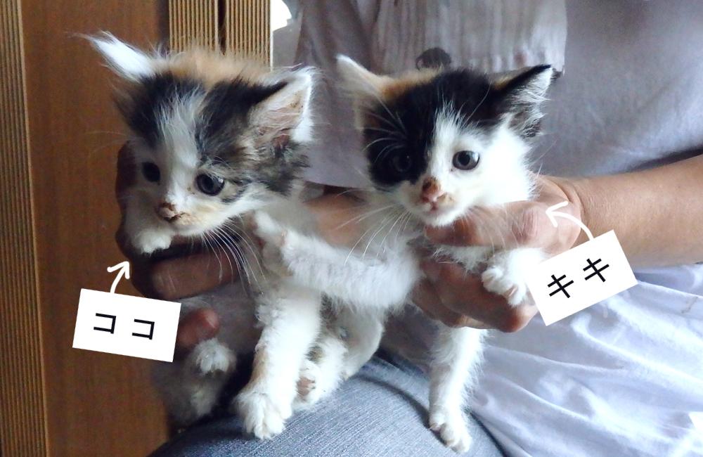 ココ&キキ