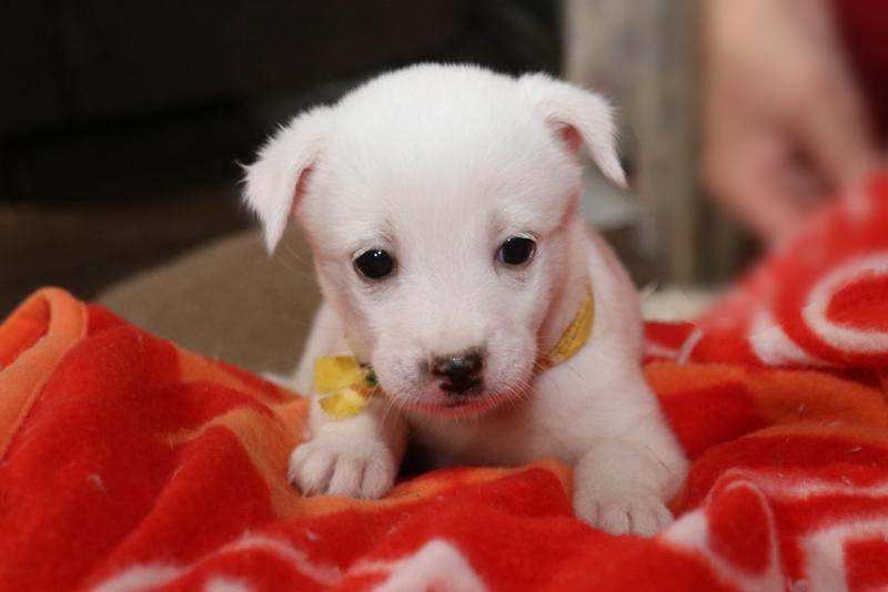 白い子犬のきき