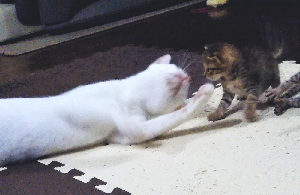 子猫を捕まえたいももちゃん