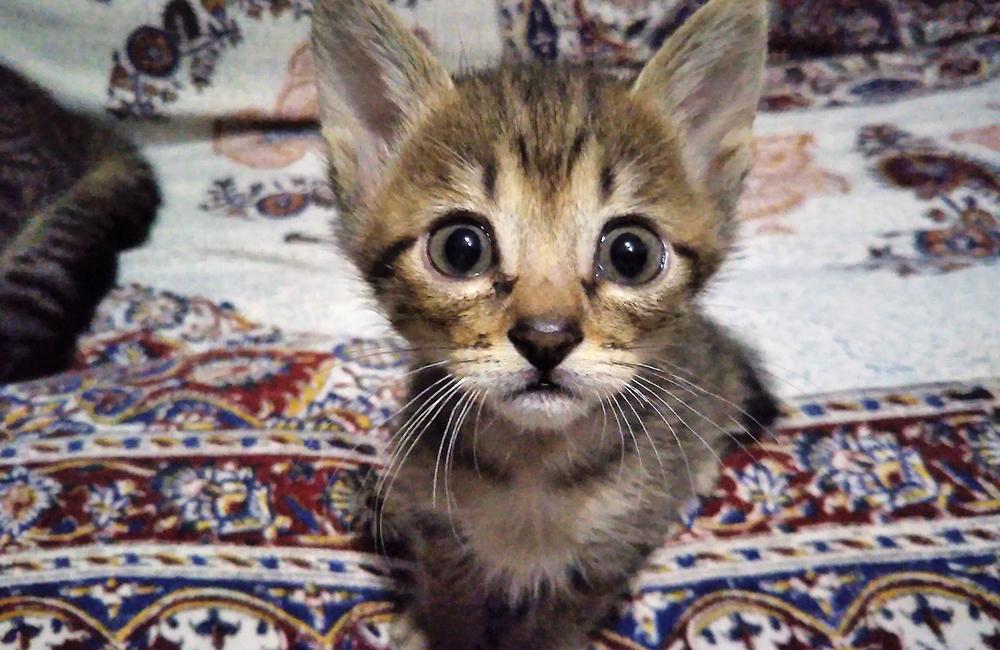 子猫の「なな」