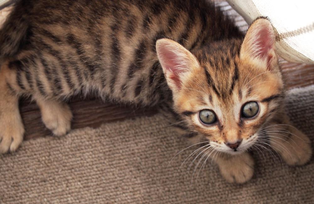 子猫の「にこ」